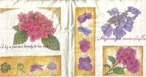 S 15 Blumenmotive