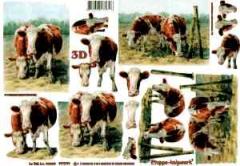 4169568 Kühe auf der Weide
