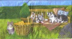 S 03 Katzenfamilie auf der Bank