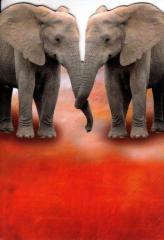 126T Doppelkarte Elefanten