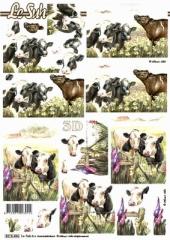 8215496 Kühe auf der Wiese