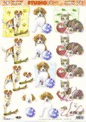 STT476 Katzen